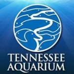 Tennessee Aquarium Coupons